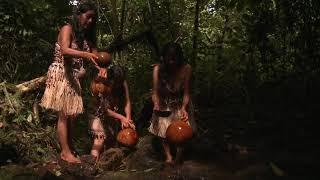 Sisa Salgado Amazon Rainforest