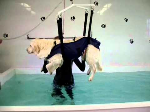 Canine Hydrotherapy Hoist Exiting The Pool Youtube