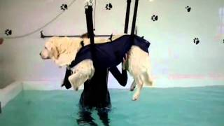 Canine Hydrotherapy Hoist - Exiting The Pool