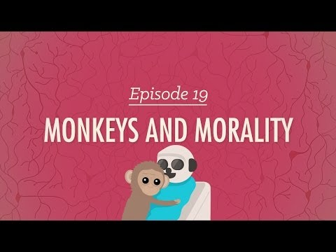 monkeys-and-morality:-crash-course-psychology-#19