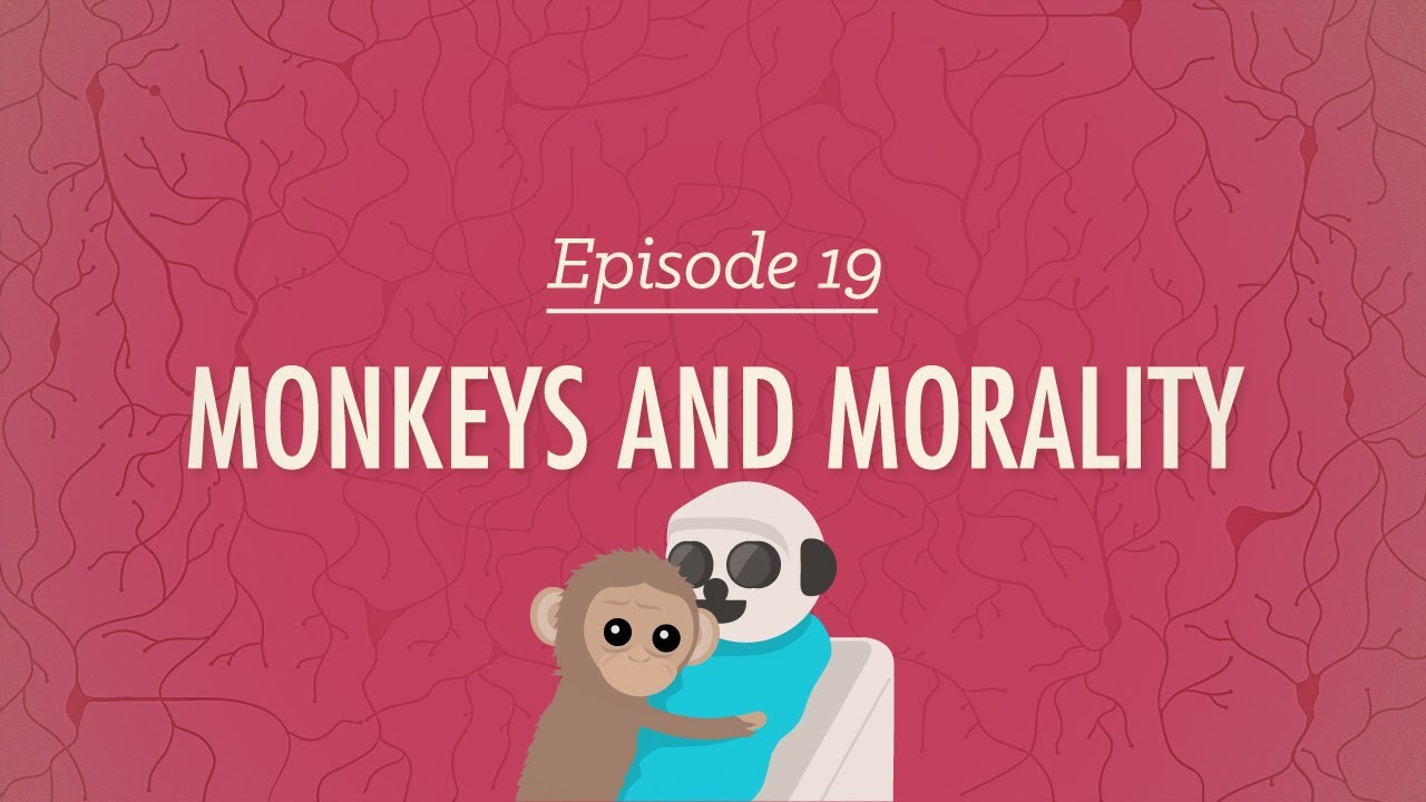 Download Monkeys and Morality: Crash Course Psychology #19