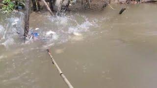 thưc tế máy 8 fet cá siêu nỗi lh 0333084930
