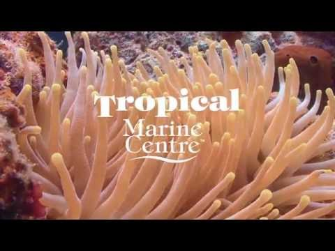 Tropical Marine Centre - Company Overview