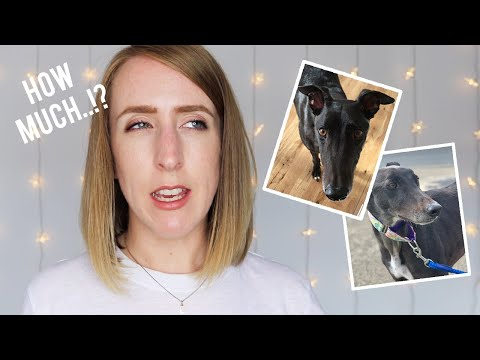 THE HIDDEN COSTS OF GETTING A DOG | (Ps. Contains lots of greyhound advice)