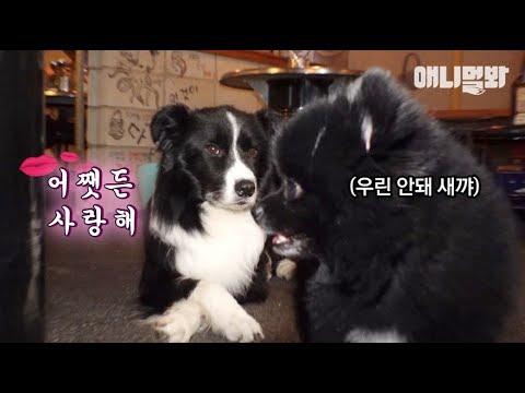 브로크백 멍운틴 ㅣ Border Collie Dog's Dating Preference Is..? from YouTube · Duration:  3 minutes 30 seconds