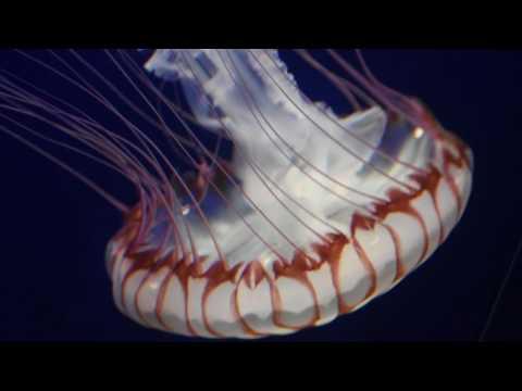 Omaha Aquarium footage