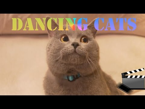 Dancing Cats: The Movie Trailer HD