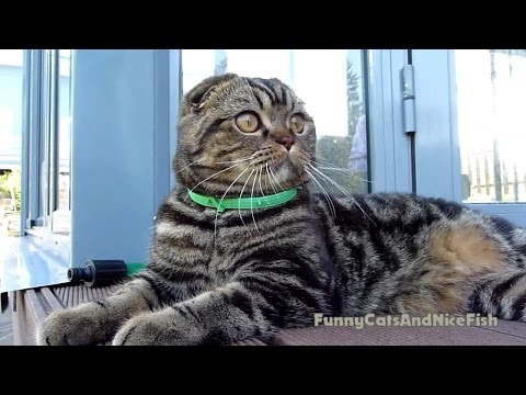 Girl - Hunter and Boy - Lover | Funny Cats video