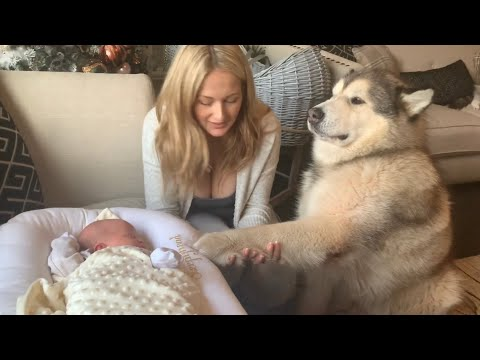 CURIOUS DOGS BONDING WITH NEWBORN BABY AND INVESTIGATING TOYS