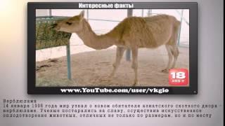 Гибриды животных видео