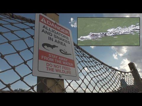 Despite Horrific Tragedy, Alligators Were Still Found Near The Disney Resort