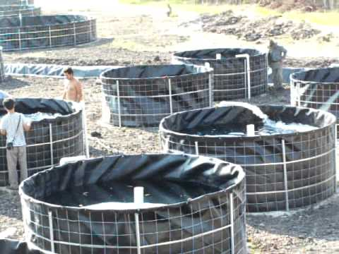 Tanques De Geomembrana Para Tilapia Tangeomex Youtube