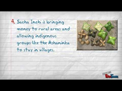 Top 5 Benefits of Sacha Inchi and Why You Need It