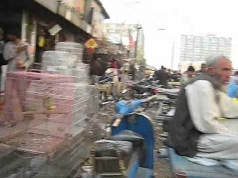 Bird's market in Pakistan - Bang Box