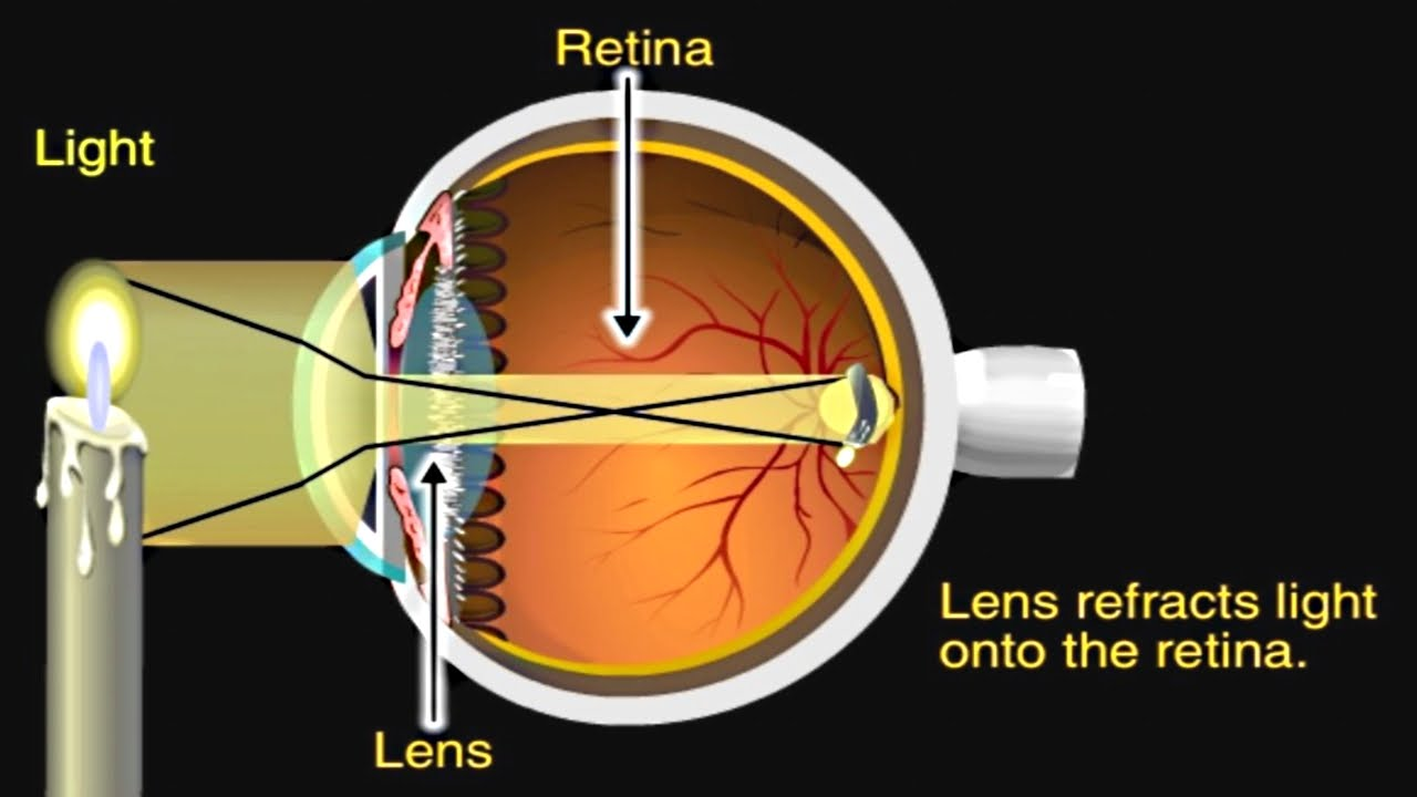 how the eye works animation how do we see video nearsighted rh youtube com Labed Eye Parts of the Human Eye Diagram