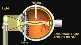 Download How the Eye Works Animation - How Do We See Video - Nearsighted & Farsighted Human Eye Anatomy Mp3 and Videos