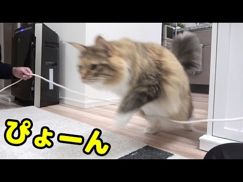 猫と縄跳びしてみた