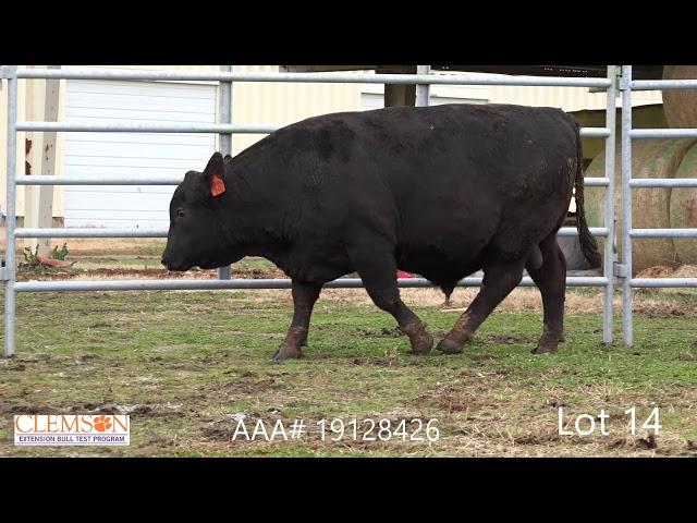 Clemson Extension Bull Test Lot 14