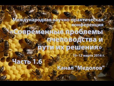 Лечение заболеваний пчел гнильцом