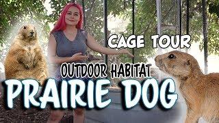 Prairie Dog Outdoor Habitat Tour