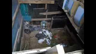 Разведение кроликов в яме.(Кролики в яме. Показаны поилки, кормушки. О разведении кроликов с наименьшими затратами - на http://krolik-v-yame.ru/, 2013-12-05T08:51:31.000Z)