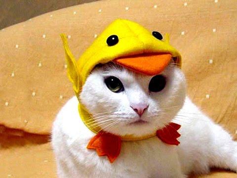 Śmieszne Koty [#14]