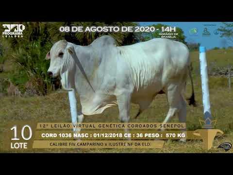 LOTE 10 CORD 1036