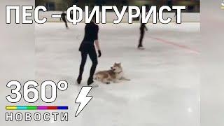 Алина Загитова учит собаку стоять на льду