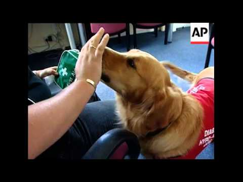 Dogs trained to assist diabetics