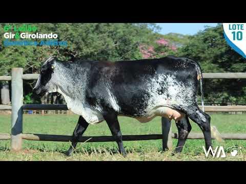LOTE 10 - 6342 BD - 6º Leilão Gir & Girolando Genética Aditiva