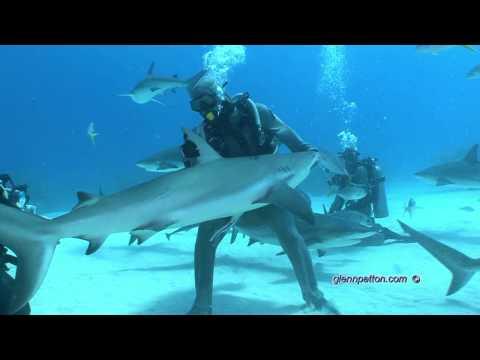 Shark Dive UNEXSO HD