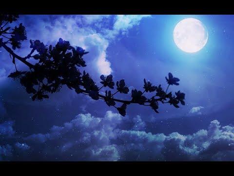 Майские ночи