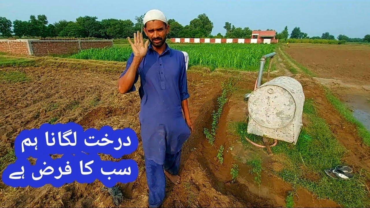 درخت لگیں بخت جاگیں  Village life  Mozzam Saleem Mozzam Saleem