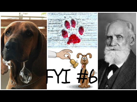 Pavlov's dogs and how to help our best friends learn | FYI #6