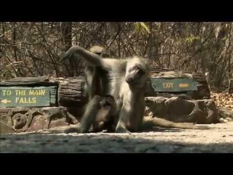 Zimbabwe, Victoria Falls Travel