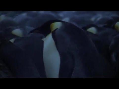 Emperor Penguins in Antarctica - BBC Planet Earth
