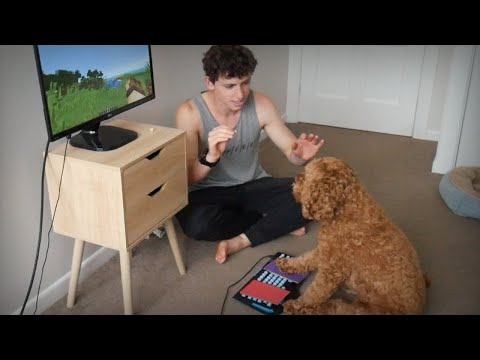 I Taught My Dog To Play Minecraft