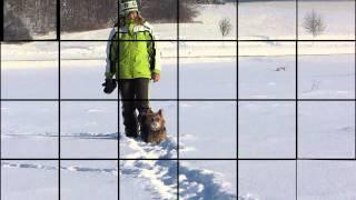 Der Australian Terrier im Winter.
