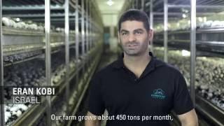 Drip Irrigation for Mushrooms in Israel: Netafim Customer Testimonial