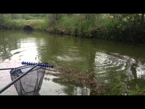 Pipehill Fisheries, Coarse Fishing Midlands,carp,bream,crucian,sweetcorn,float,leadger,feeder