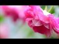【作業用BGM】いきものがかり 癒しオルゴール 名曲メドレー 作業+勉強+睡眠 Healing music box TV
