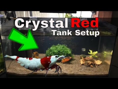 How To Make A Freshwater Crystal Red Shrimp Planted Breeding Aquarium 🦐 Marks Shrimp Tanks