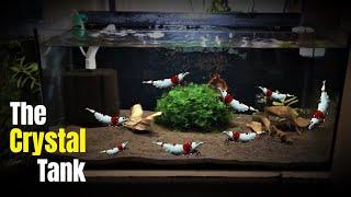 how to setup a planted crystal red shrimp breeding tank aquarium