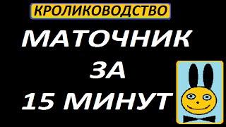 Кролики Маточник за 15 минут