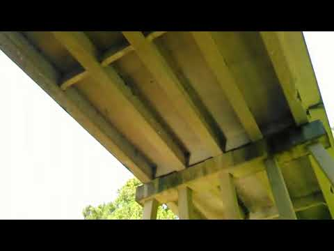 Birds under CR 150 bridge, Alapaha River