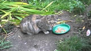 Завтрак беременной кошки
