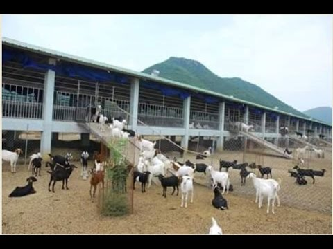 SHEEP AND GOAT FARMING : HOW TO CONSTRUCT SHEEP SHED ...