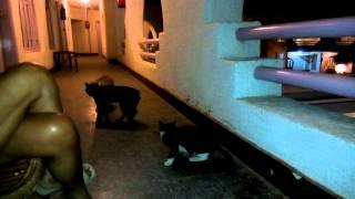 Коты в законе Шарм Эль Шейх Египет