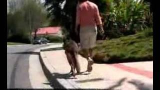 Dog Training Camp San Diego German Shepherd Dog