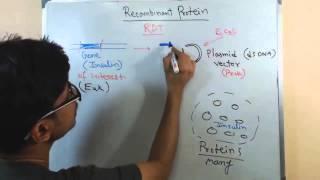 Recombinant protein
